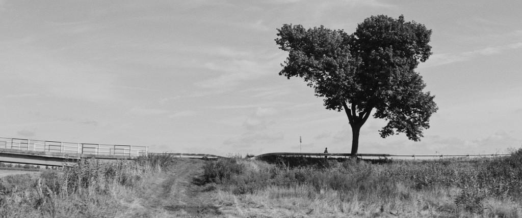 Przystanek drzewo